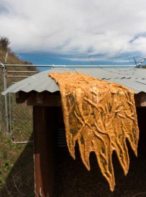 Beast_Sessa Roof Day